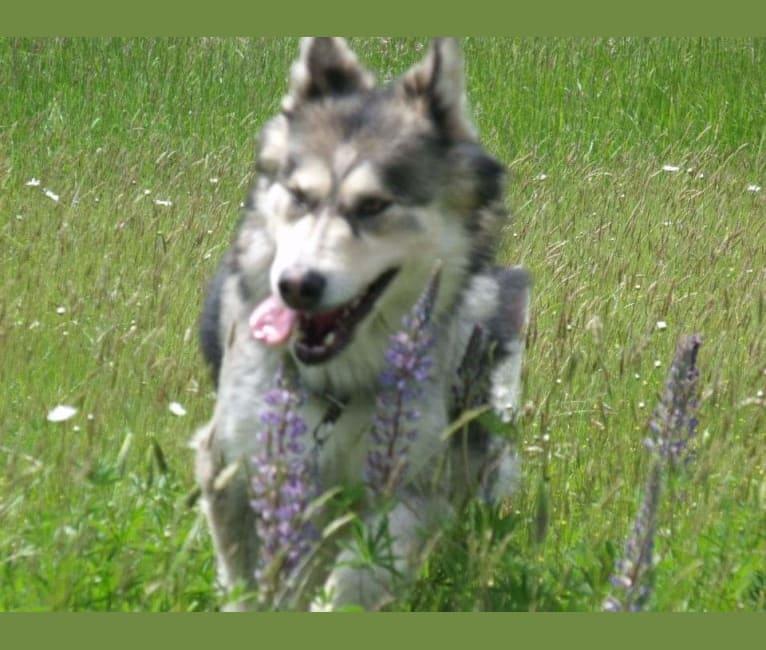 Photo of Lakota, a   in Oregon, USA