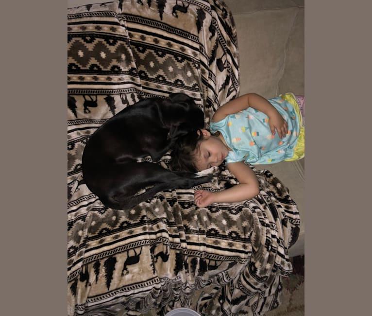 Photo of Zoë, a Chihuahua, Beagle, Labrador Retriever, and Mixed mix in Kentucky, USA