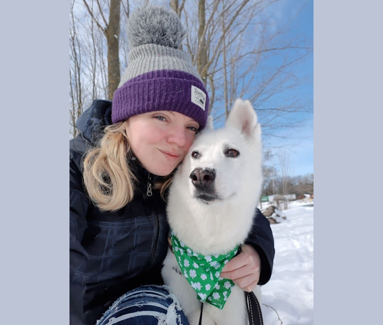 Photo of Charlie, an Alaskan-type Husky  in Quebec, Canada