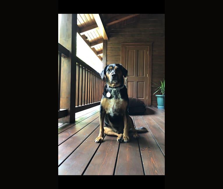 Photo of Oscar, an Eastern European Village Dog, English Cocker Spaniel, and Cocker Spaniel mix in İstanbul, İstanbul, Turkey