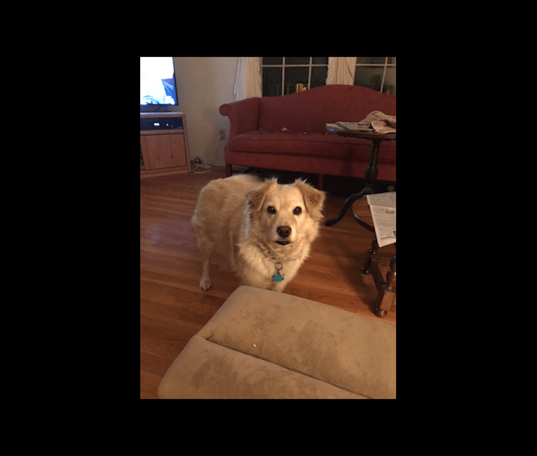 Photo of Buddy, a Shih Tzu, Cocker Spaniel, Poodle (Small), Pomeranian, and Mixed mix in Virginia, USA