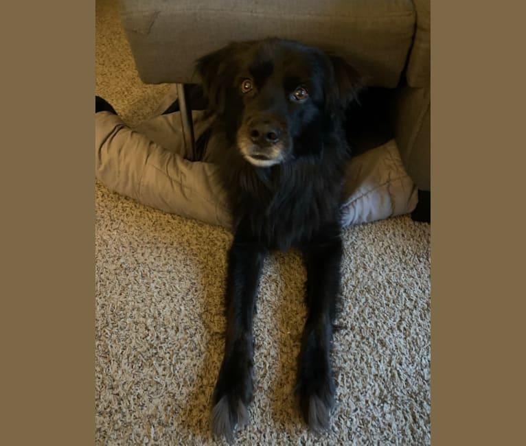 Photo of JP (Jackson Pandacat), a Rottweiler, German Shepherd Dog, Chow Chow, Labrador Retriever, and Mixed mix in Ferris, Texas, USA
