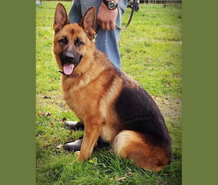 Photo of Parcour, a German Shepherd Dog  in Germany
