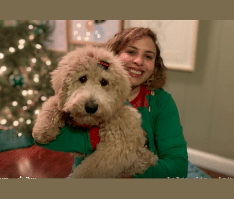 Photo of Judy, a Poodle  in Jackson, TN, USA