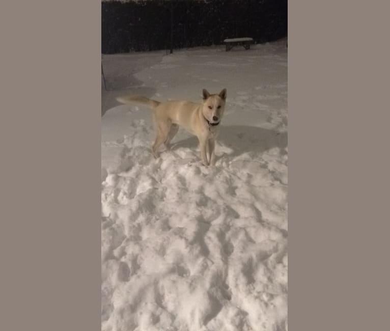 Photo of Zeus, a Siberian Husky and Alaskan Malamute mix