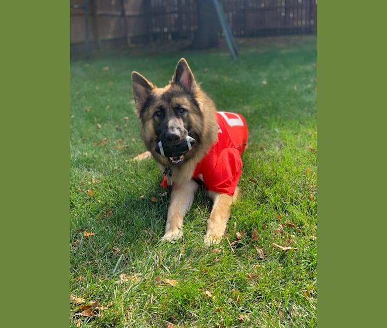 Photo of Rhett, a German Shepherd Dog  in Council Bluffs, IA, USA
