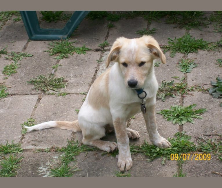Photo of Tesla, a Labrador Retriever, American English Coonhound, Chow Chow, Australian Cattle Dog, and Mixed mix in Tennessee, USA