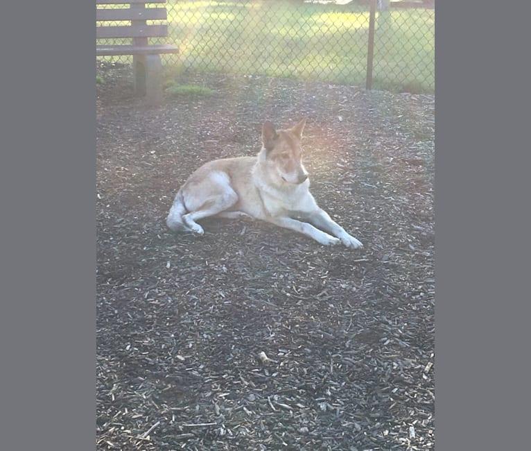 Photo of Ryder, a   in Cedarville, Arkansas, USA
