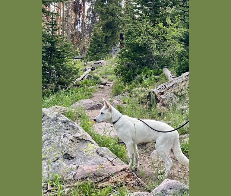 Photo of Nanuq, a   in Minnesota, USA