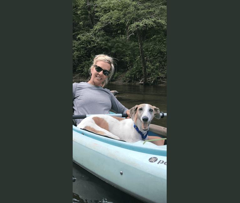 Photo of Murphy, a Greyhound, Whippet, and Mixed mix in Greensboro, North Carolina, USA