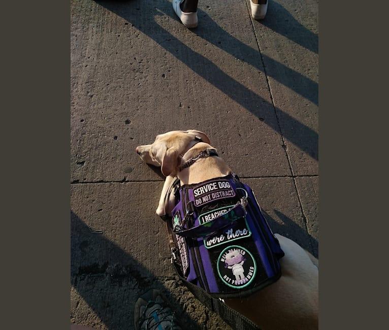 Photo of Bolin, an American Village Dog