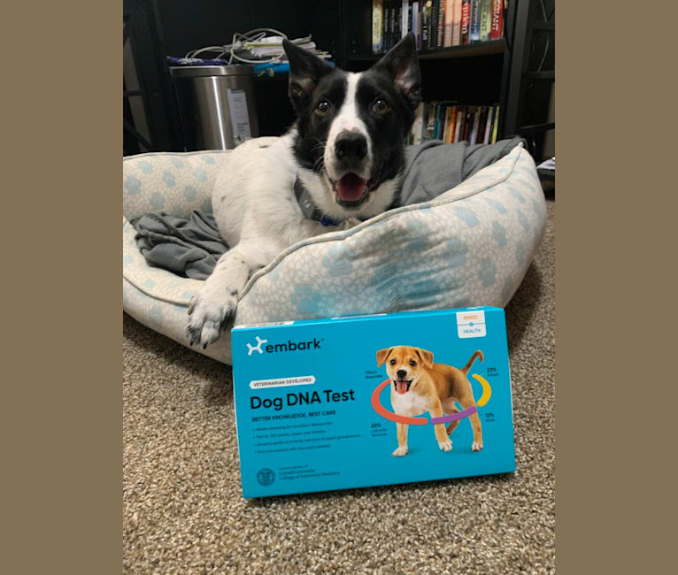 Photo of Lupita, an Australian Cattle Dog, Border Collie, and Labrador Retriever mix in SPCA of Polk County, South Houston Avenue, Livingston, TX, USA