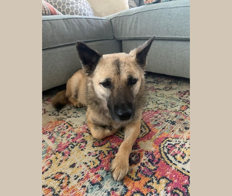 Photo of Remy, a Chinese Village Dog  in Santa Clarita, California, USA