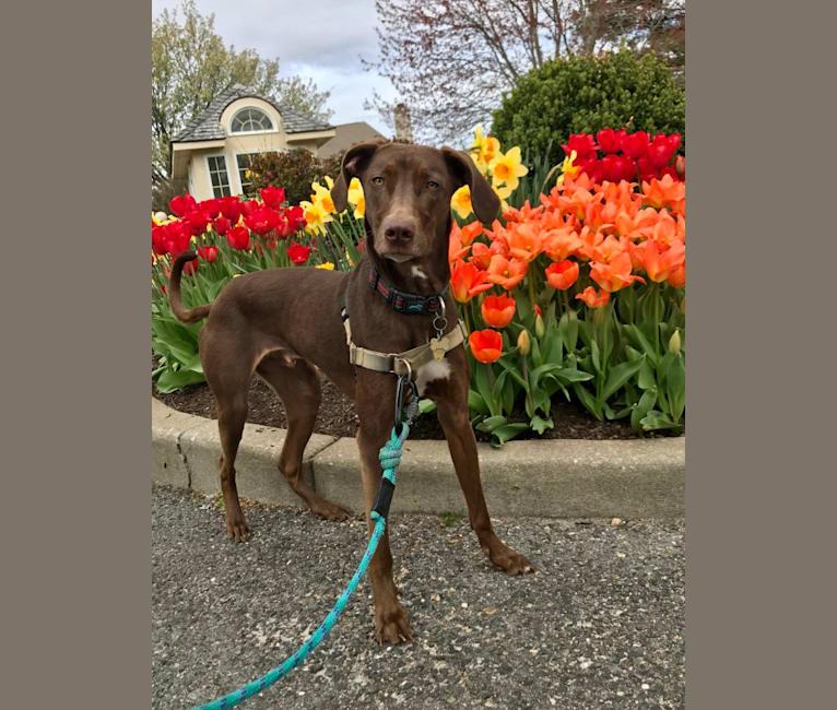 Photo of Beau, an American Village Dog  in Broken Bow, Oklahoma, USA