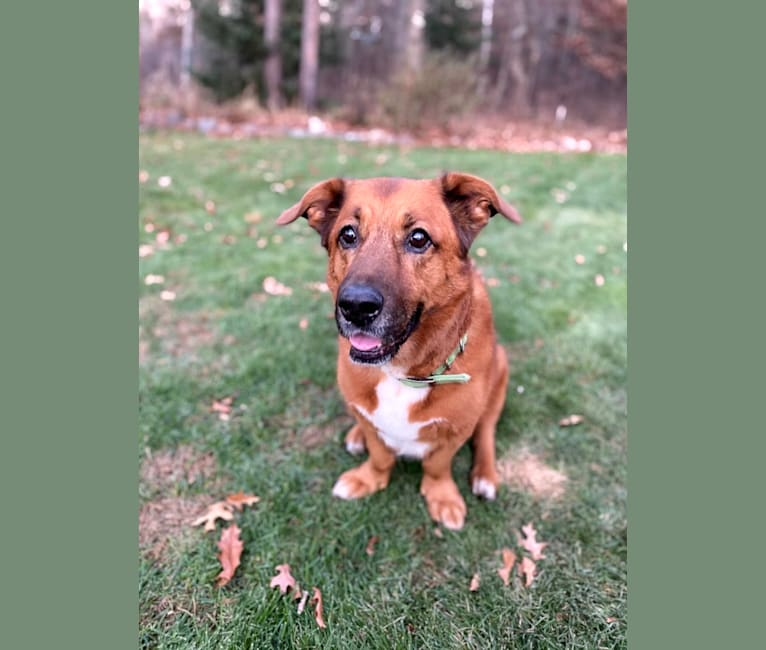 Photo of Duke, a Labrador Retriever, Cardigan Welsh Corgi, German Shepherd Dog, Pekingese, Dachshund, and Mixed mix in Baxter, Minnesota, USA