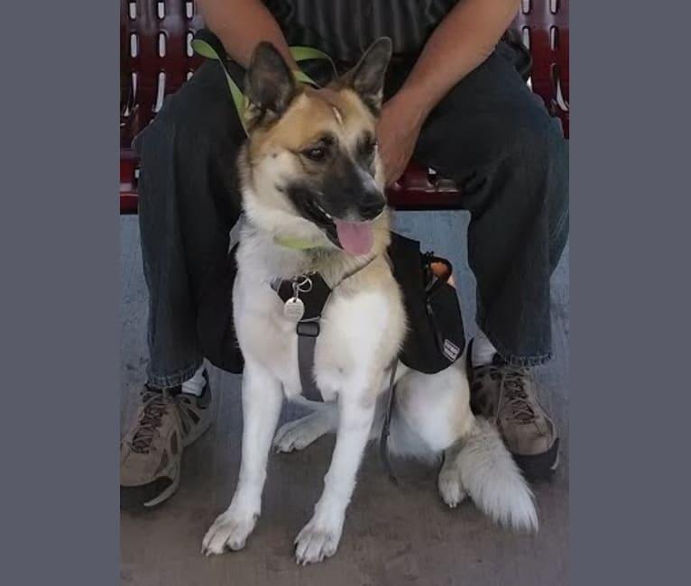 Photo of Piper, a Labrador Retriever, Australian Cattle Dog, Border Collie, and Australian Shepherd mix in Boone, IA, USA