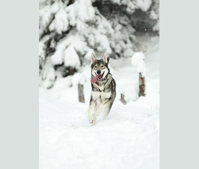 Photo of Buck, a   in Switzerland