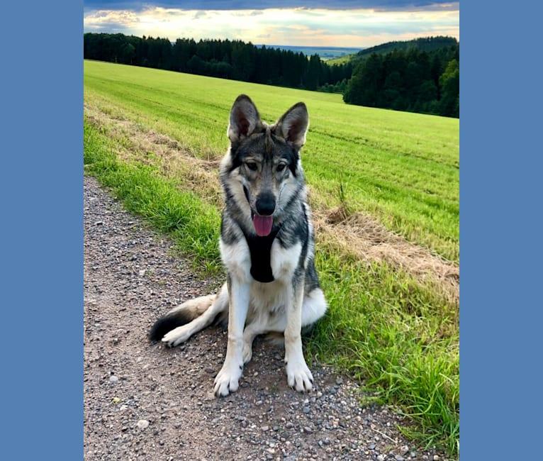 Photo of Akai, a   in Augsburg, Deutschland