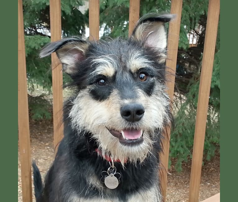 Photo of Ellie, a Labrador Retriever, Australian Cattle Dog, German Shepherd Dog, and Mixed mix in Oklahoma, USA
