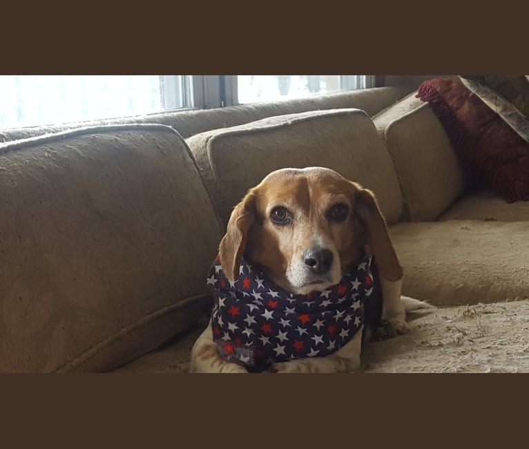 Photo of Fee Fee, a Beagle  in USA