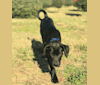 Photo of Zero, a Boxer, Labrador Retriever, American Bulldog, Chow Chow, American Staffordshire Terrier, and Mixed mix in Columbia, South Carolina, USA