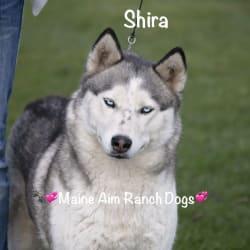 Miss Maine Aim Shira