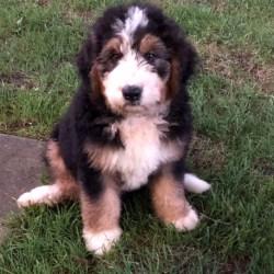 Embark Dog DNA Test - Breed