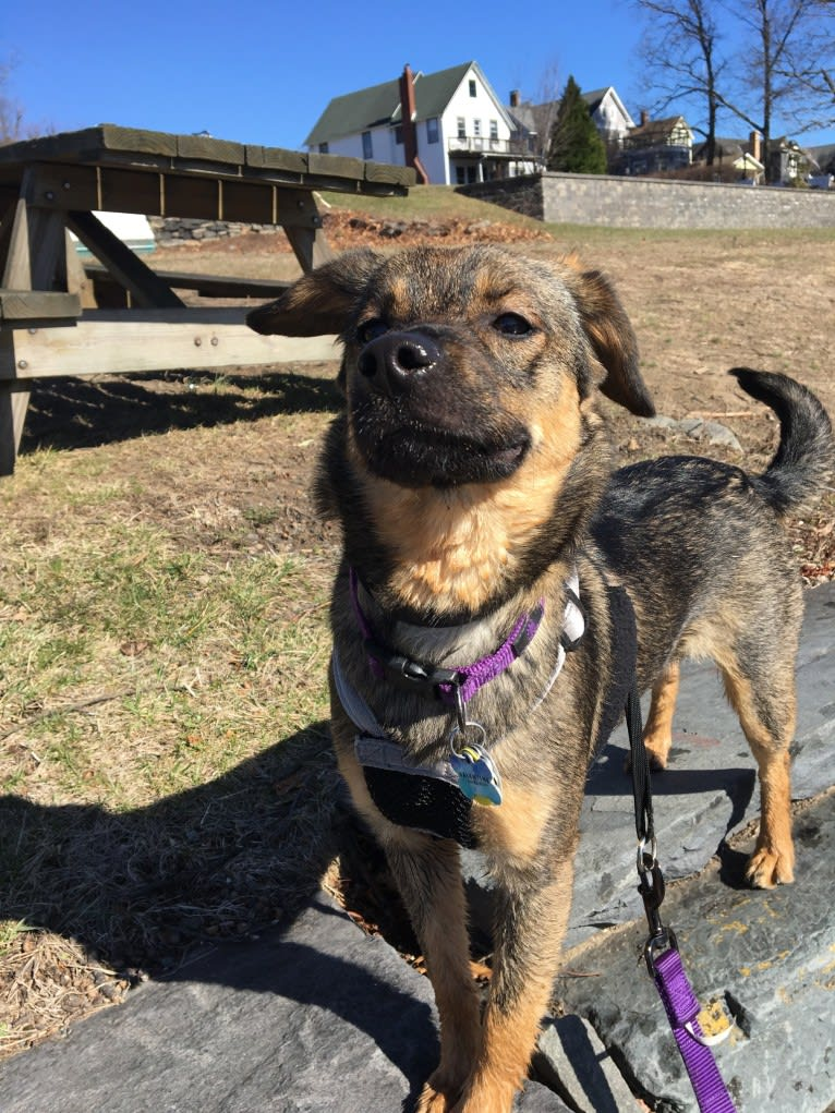 Photo of Valentine, a Bichon Frise, German Shepherd Dog, Chow Chow, American Eskimo Dog, Pomeranian, Collie, and Mixed mix in Philadelphia, Pennsylvania, USA