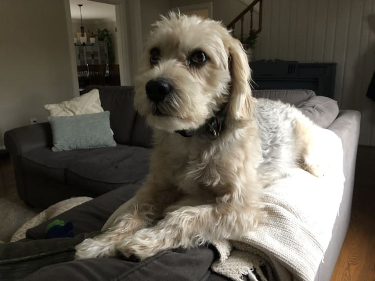 Photo of Charlie, a Beagle, Lhasa Apso, Shih Tzu, and Dalmatian mix in All Dogs Come From Heaven, Ohio Pike, Amelia, OH, USA