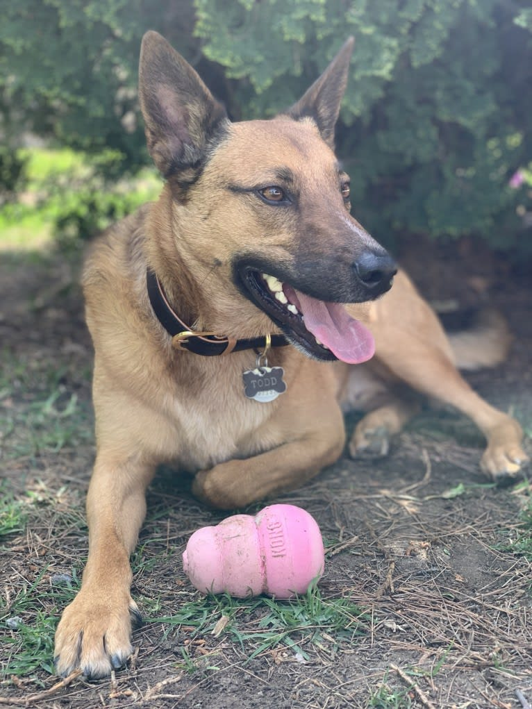 Photo of Todd, an Australian Cattle Dog, Border Collie, German Shepherd Dog, and Mixed mix in Riverside, California, USA