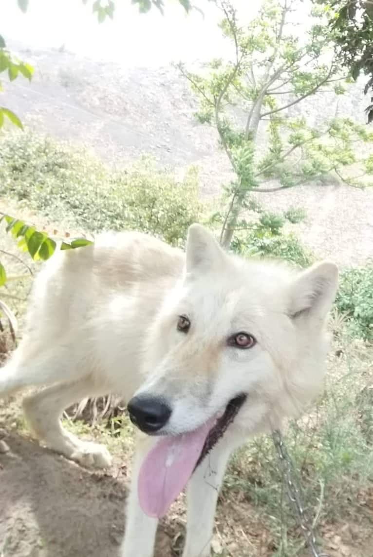 Photo of ZEN, a