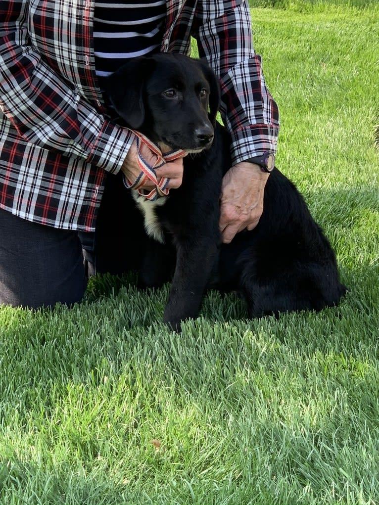 Photo of Keira Mason, an Australian Shepherd and Labrador Retriever mix in Parker, KS, USA