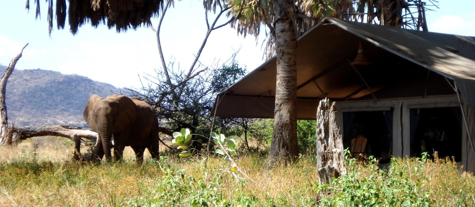 Elephant Bedroom Camp Hotel In Kenya Enchanting Travels