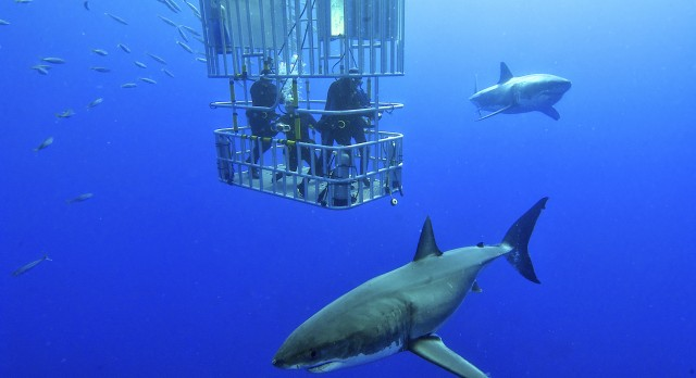 Shark cage diving in Namibia with Enchanting Travels - Top 10 adventures