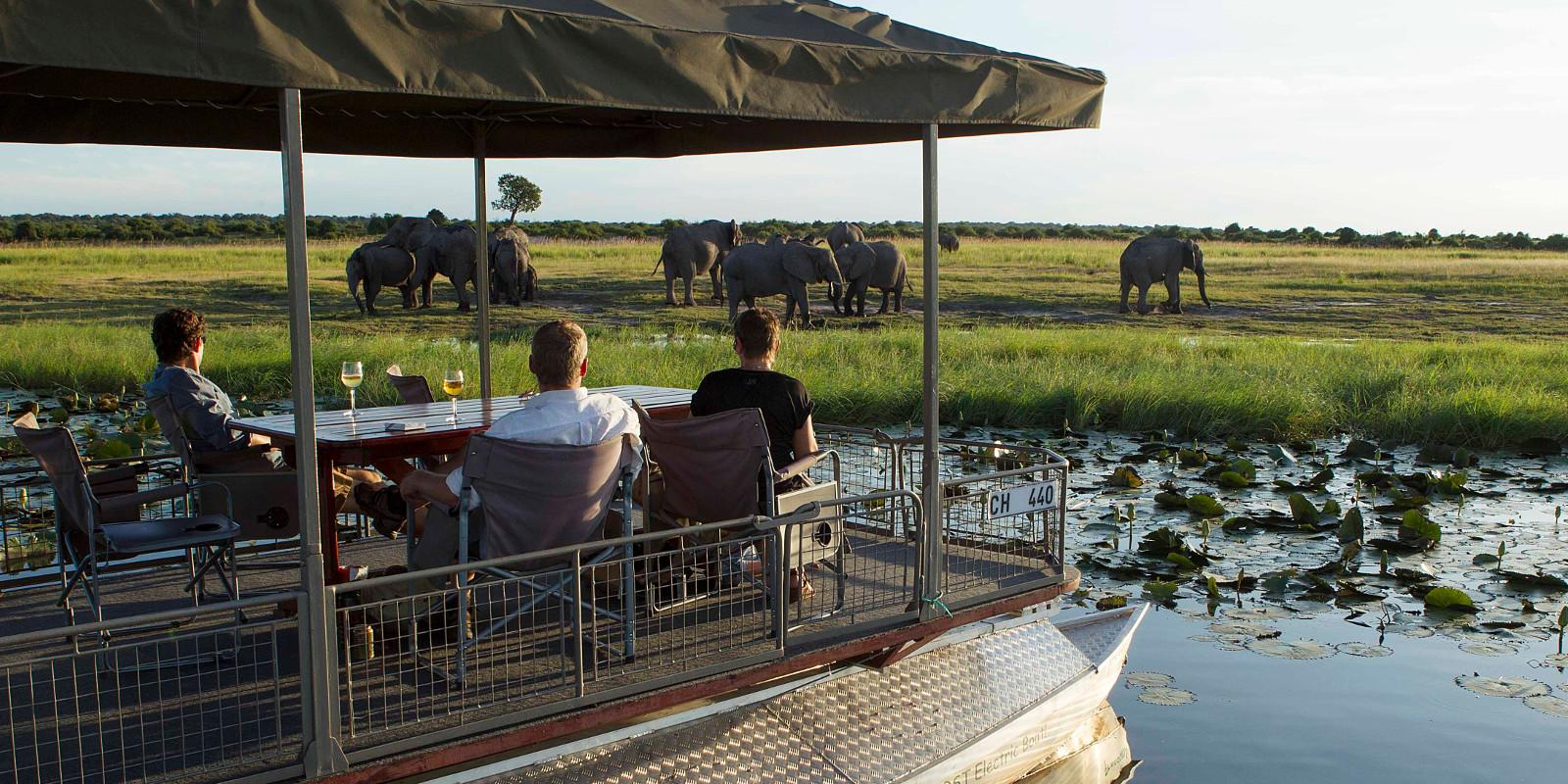 Chobe Tours