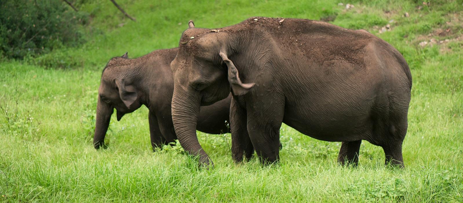 Enchanting Travels South India Vacation Backwaters in Kerala Tour (9)