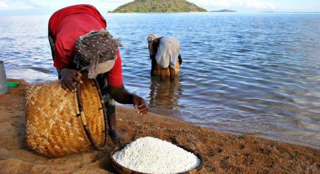 A pair of women harvest Lake Malawi, Africa