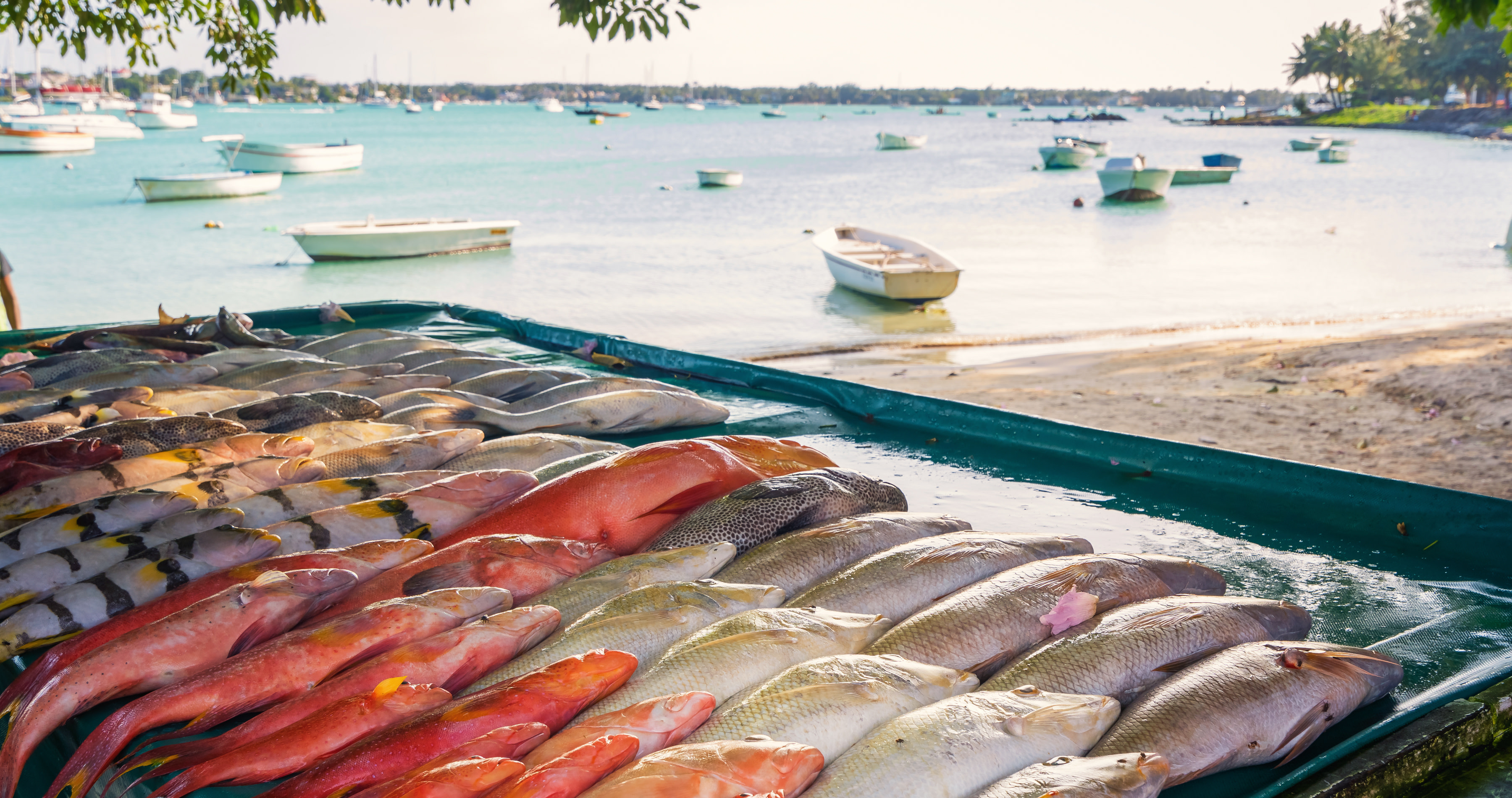 Delicious fish dishes of Mauritius - fresh fish from the ocean