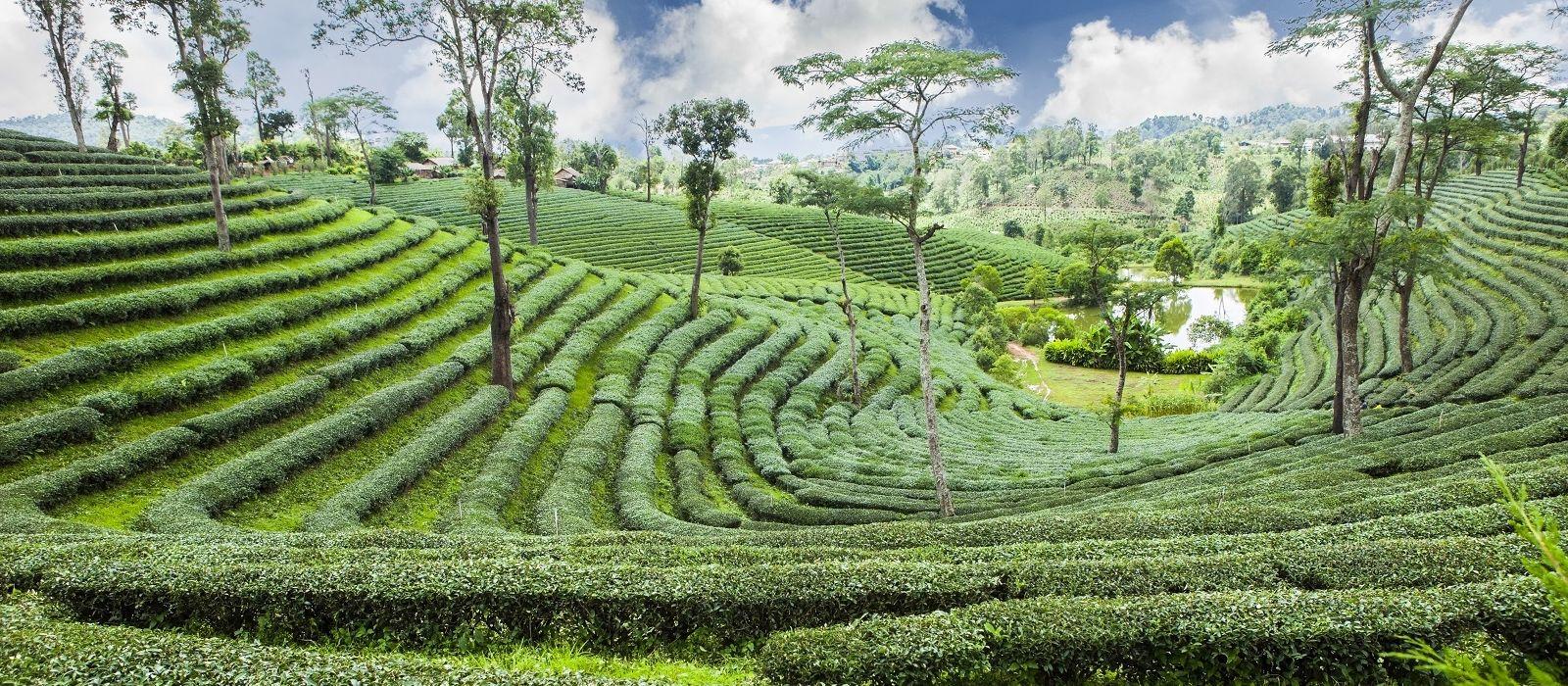 Destination Pussellawa Sri Lanka