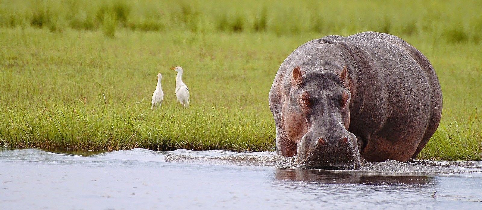Destination Mana Pools Zimbabwe