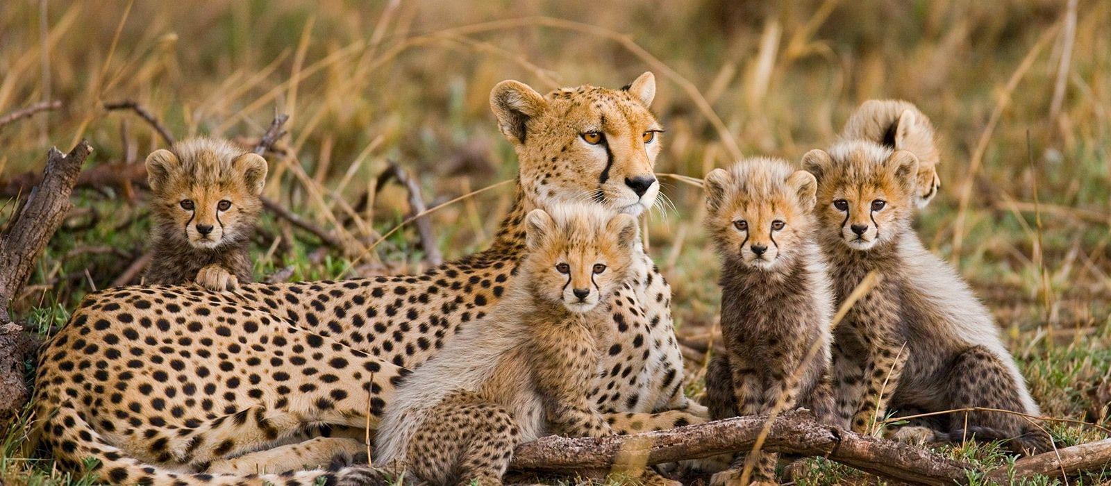 Tansania Luxusreise: Serengeti, Viktoriasee & Big Five Urlaub 4
