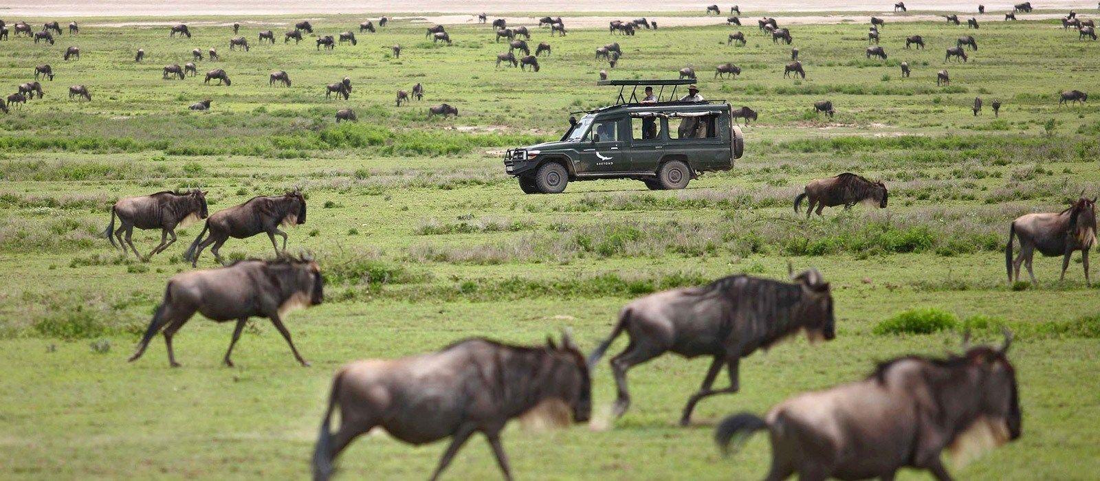 Tansania Luxusreise: Serengeti, Viktoriasee & Big Five Urlaub 3