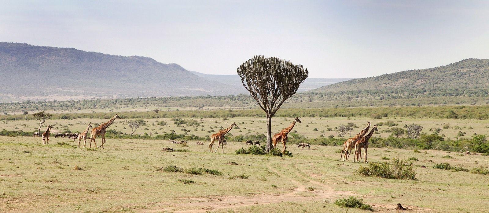 Reiseziel West Kilimanjaro Wildschutzgebiet Tansania