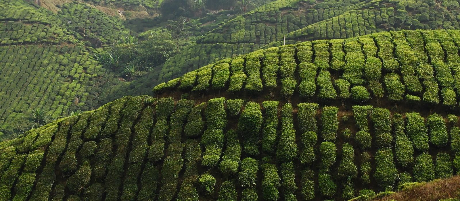 Sri Lanka: Reise zur Heimat des berühmten Ceylon-Tees Urlaub 4