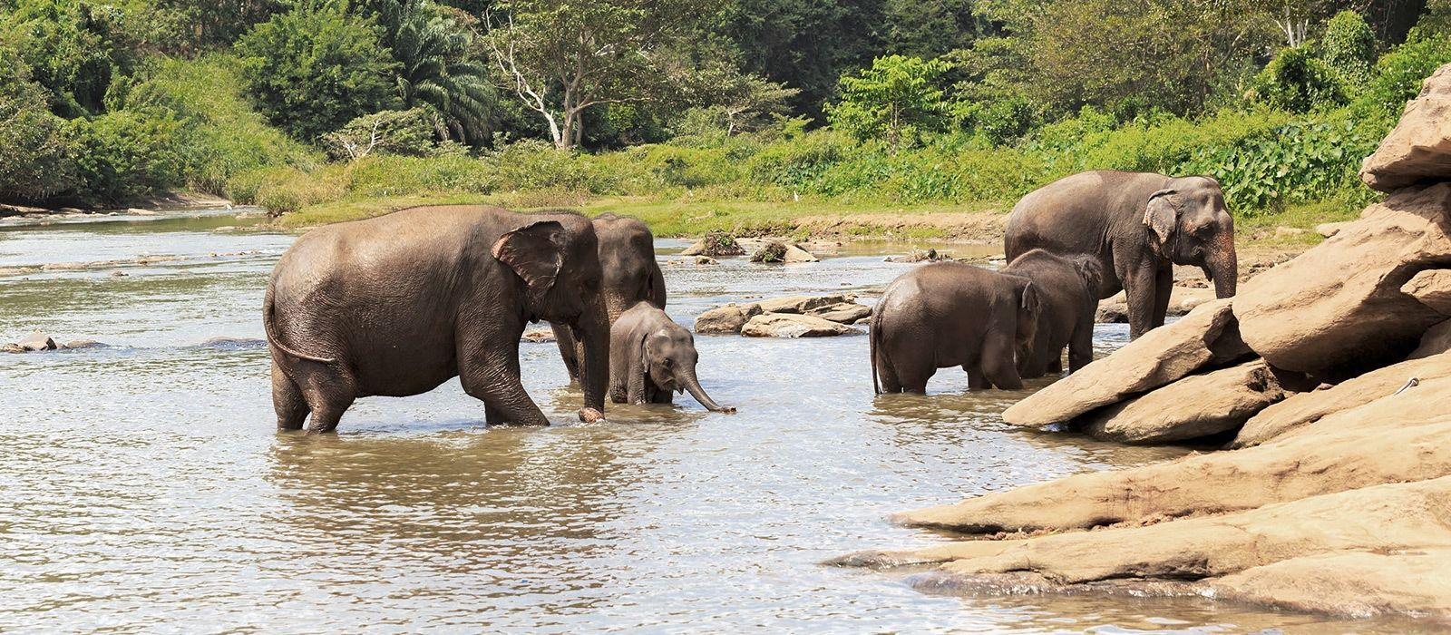 Reiseziel Wilpattu Sri Lanka