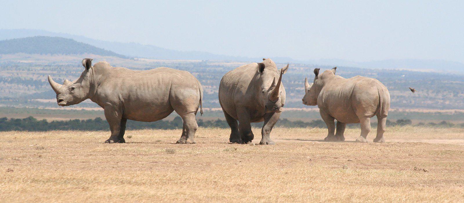 Kenia: Wandersafari Rundreise Urlaub 3