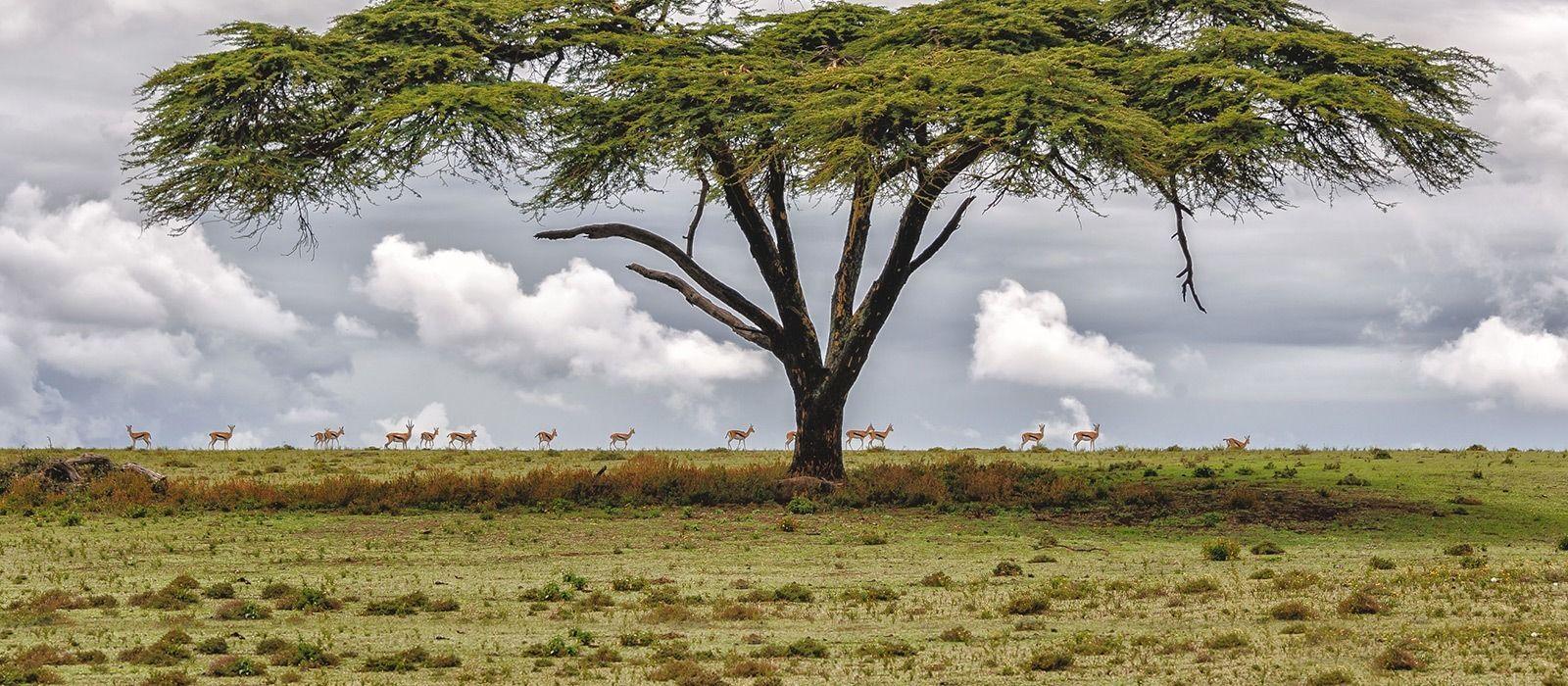 Kenia: Masai Mara, Wandersafaris & Traumstrände Urlaub 1