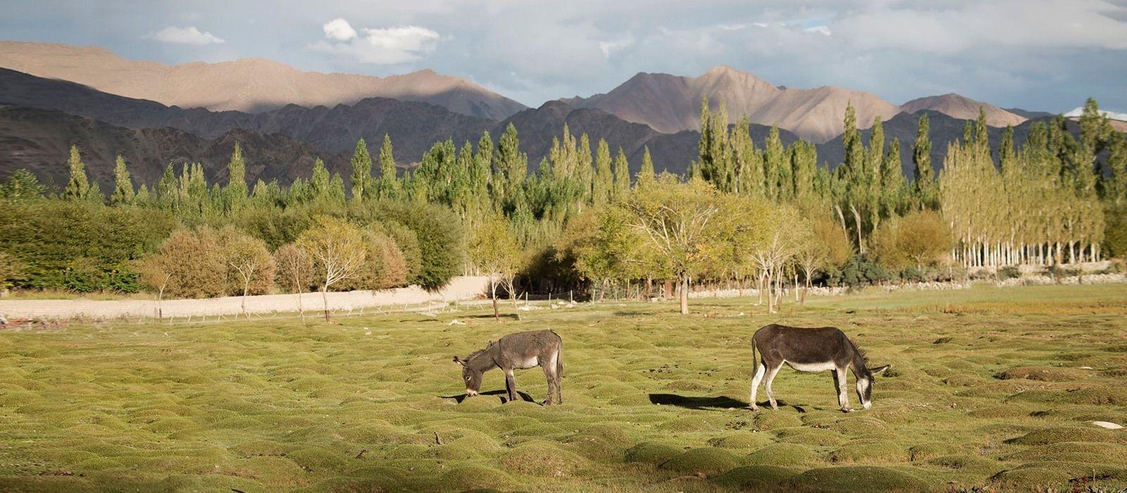 Destination Leh Himalayas