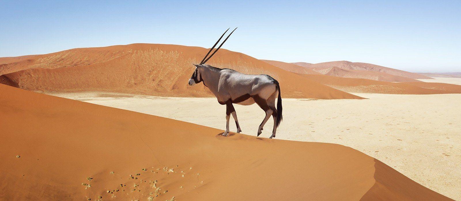 Namibia Rundreise: Höhepunkte des Nordens Urlaub 2