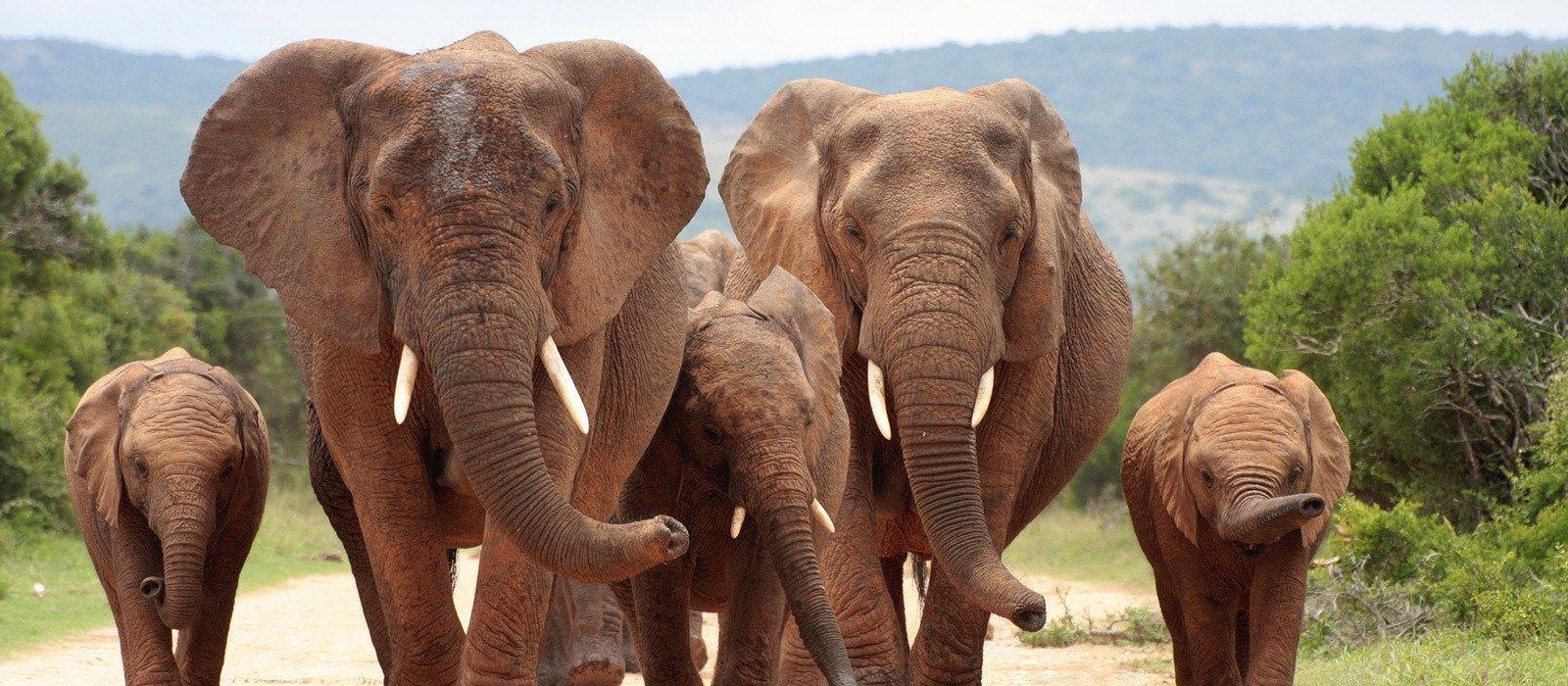 Große Rundreise im südlichen Afrika Urlaub 3